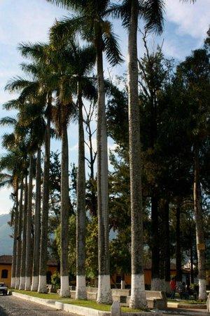 Hotel y Restaurante Vista Volcanes: San Sebastian Park