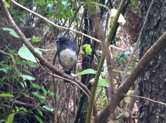 Ruggedy Range Wilderness Experience: There is a great diversity of birds in Ulva island, but only visible when walking in small group