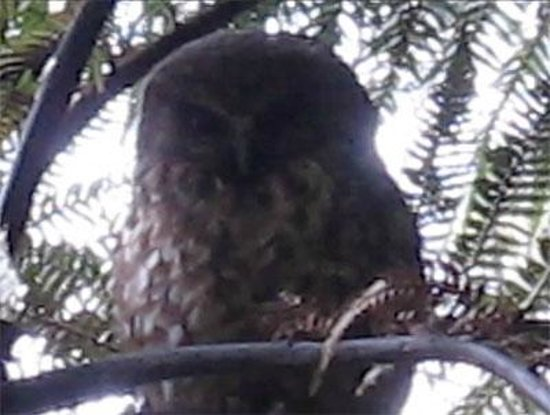 Ruggedy Range Wilderness Experience: Even owls can rarely be seen in daylight hours, but only in special circunstances. We were lucky
