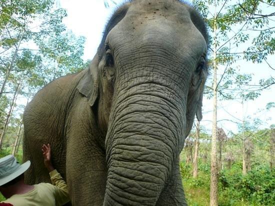 Boon Lott's Elephant Sanctuary : hello, how are you ?