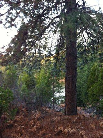 Mount Shasta Resort: View from deck