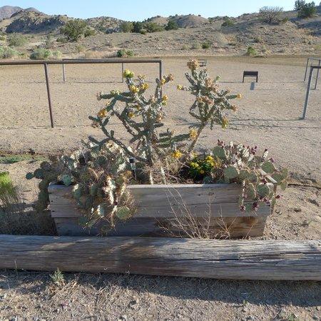 "Broken Saddle Riding Company: Cowboy ""flower"" beds"
