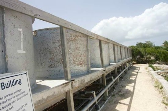 Caicos Conch Farm: conch farm