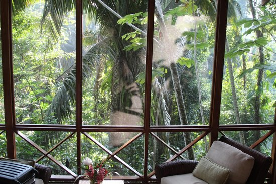 Ian Anderson's Caves Branch Jungle Lodge : Living room view from bed