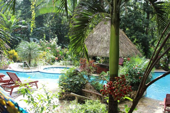 Ian Anderson's Caves Branch Jungle Lodge : Pool