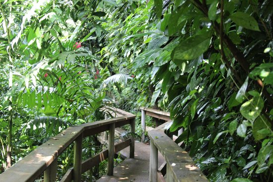 Ian Anderson's Caves Branch Jungle Lodge : Walkway to tree houses