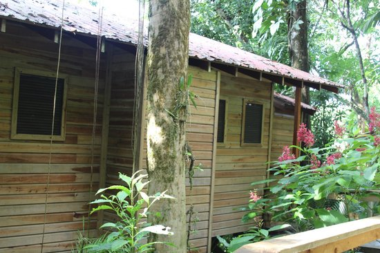 Ian Anderson's Caves Branch Jungle Lodge: Back of river view tree house