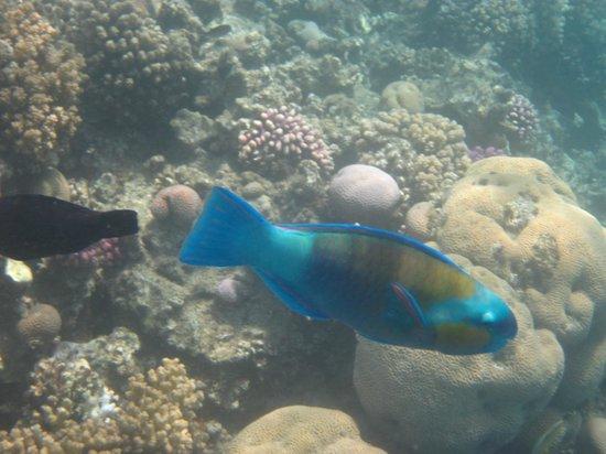 SUNRISE Select Royal Makadi Resort: глубины моря