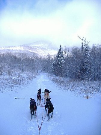 Seal Cove Journey's Dog Sledding