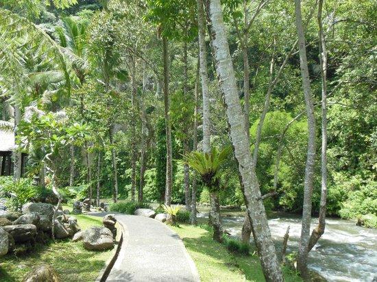 رويال بيتا ماها: jungle