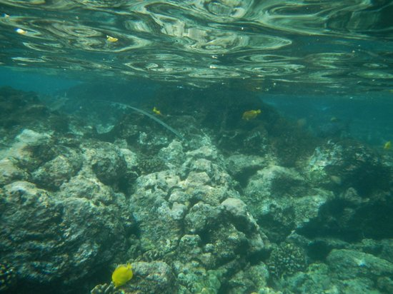 Kealakekua Bay: Reef is close to surface