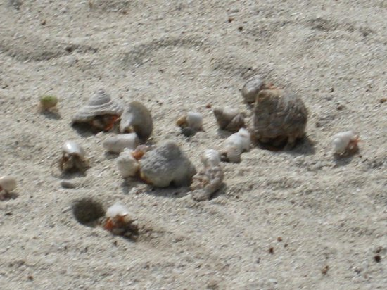 Teking Lagoon Cruises: Hermit Crab race after lunch!