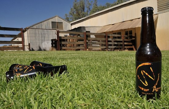 Murtho, Australia: Amazon Ale, lawn out the front  of the Woolshed