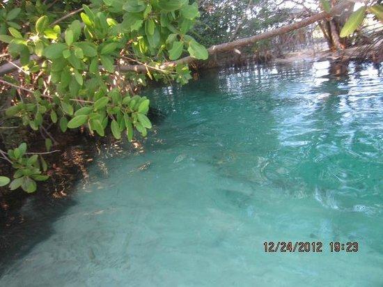 Hacienda Tres Rios: The Cinotes