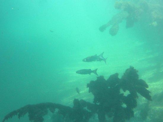 Hacienda Tres Rios: Snorkeling in the river