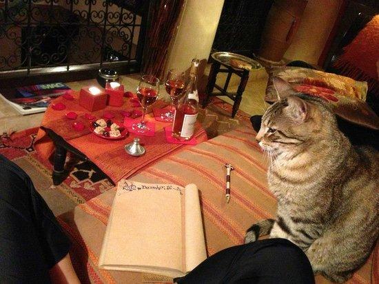 Riad Boussa: ワインと猫ちゃん♡