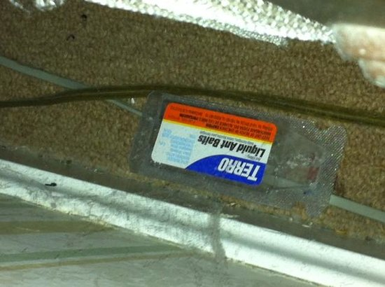 Hanover House: dusty ant trap found behind bed with nasty old carpet