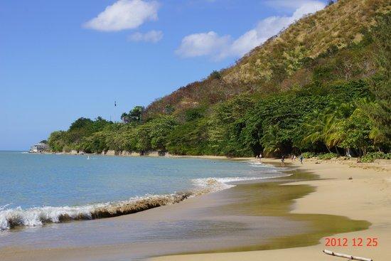 Rincon Beach Resort: Coconut Palms along the Beach