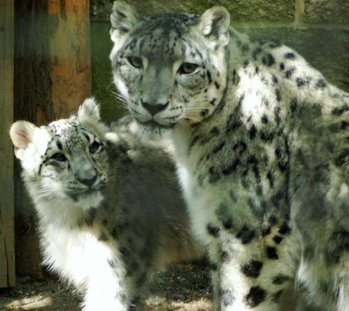 Cape May County Park & Zoo: Momma Himani and One of Her Cubs