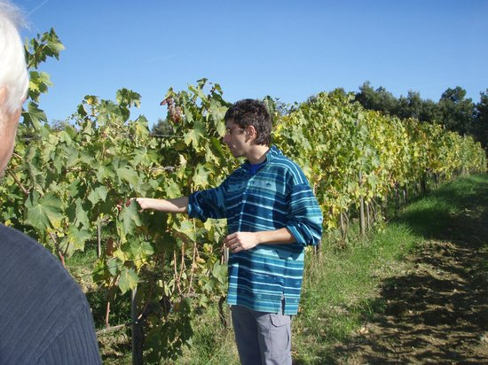 Montalcino, Italia: Giacomo and his vines