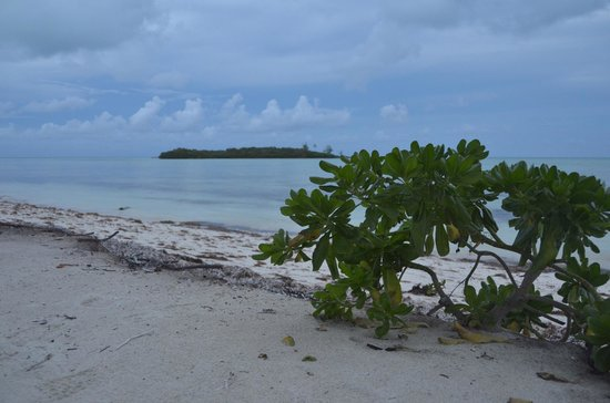 Swain's Cay Lodge : beach