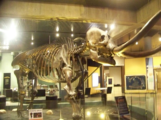 Ohio History Center: Mastadon in OHS
