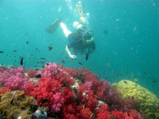 Oceanic Divecenter: Beautiful colorful coral garden
