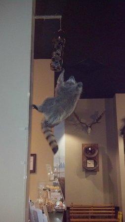 Southern Komfort Kitchen Restaurant & Catering: Raccoon decor above the dessert desk