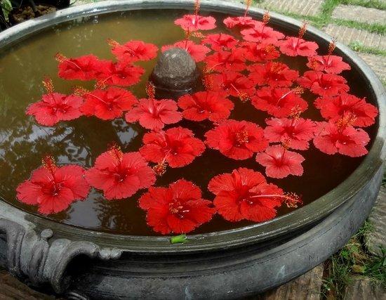 Villa Jacaranda: hibiskusblüten im garten vor zimmer #1