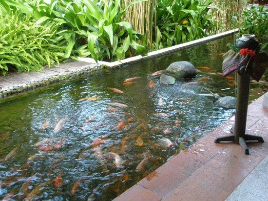 Evason Ana Mandara Nha Trang: Рыбок можно покормить