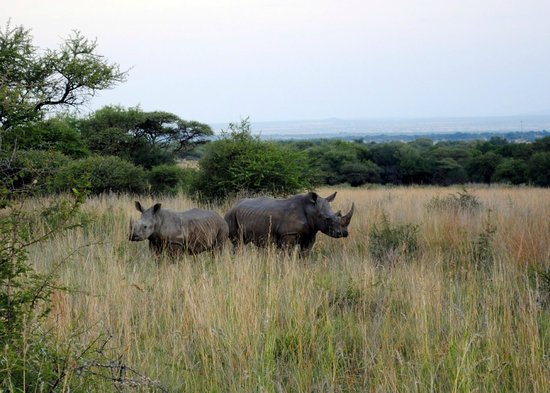 Selous Fly Fishing Lodge : Rhinos of Selous Bush Camp