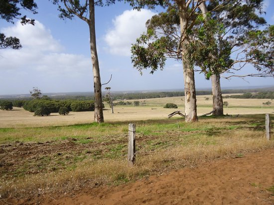 Augusta Sheoak Chalets: View from the chalet