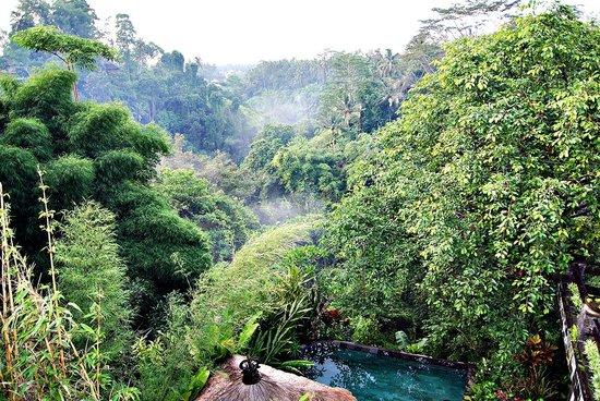 Tanah Merah Art Resort: Udsigten fra en af hytterne