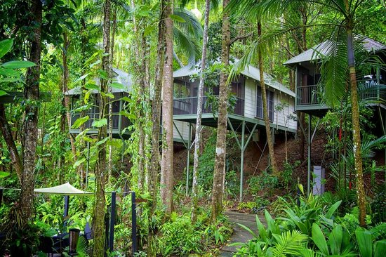 Daintree EcoLodge & Spa: Rooms facing the restaurant
