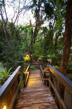 Daintree EcoLodge & Spa: The Eco Lodge hotel surroundings