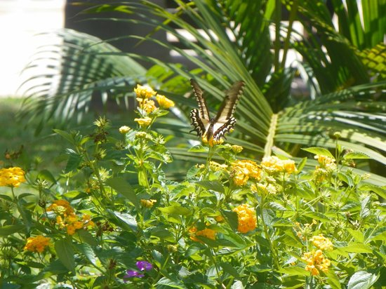 Belmond Hotel das Cataratas: Bela Borboleta que fotografamos no jardim 