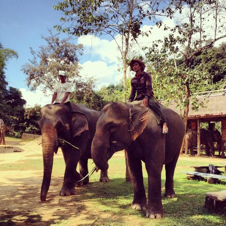 Shangri Lao: the elephants