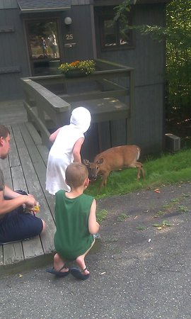 Ski Side Village: two of my children and the deer they were giving baby carrots to. (not by hand)