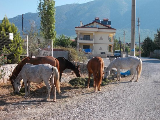 Start Apartments: horses outside the appartment
