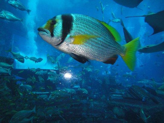 Atlantis, The Palm: Uno dei 65000 pesci dell'acquario dell'hotel