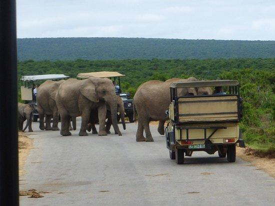 Kuzuko Lodge: Addo Elephant Park