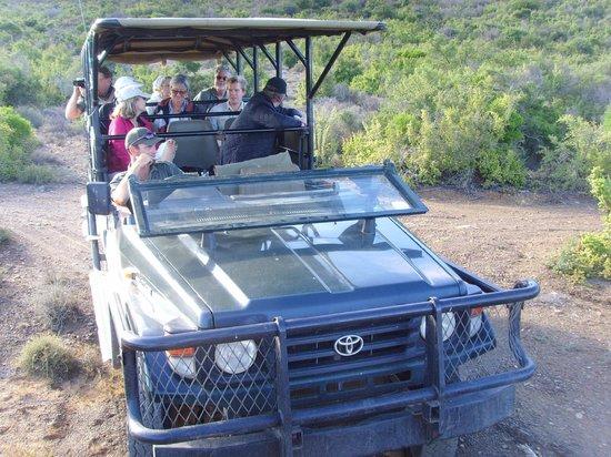 Kuzuko Lodge: Safari