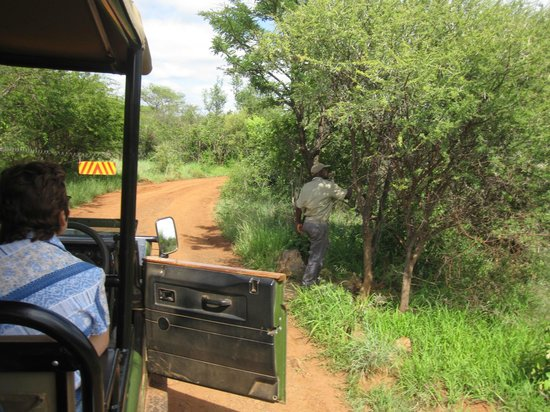 Mosetlha Bush Camp & Eco Lodge: Electric wire to keep elephants out