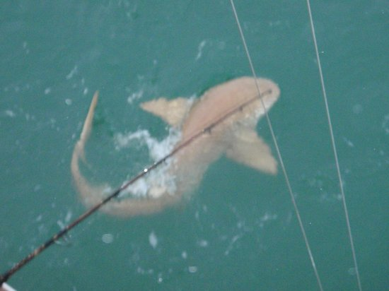 Bobby B Fishing Charters: Killer Shark Trips for Excitement You'll Never Forget!!!