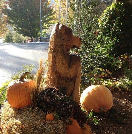 """Holiday Inn Asheville - Biltmore East: Hotel """"Bear"""" Mascot"""