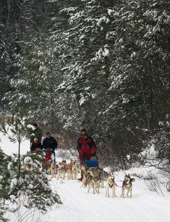 Winterdance Dogsled Tours: Beautiful.