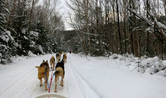 Winterdance Dogsled Tours: Gorgeous scenery.