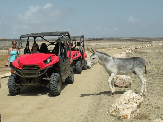 Club Arias B&B: Aruba Sunrise Tour - You get to see goats and donkeys