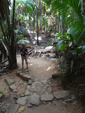 Vallee de Mai Nature Reserve: You feel small