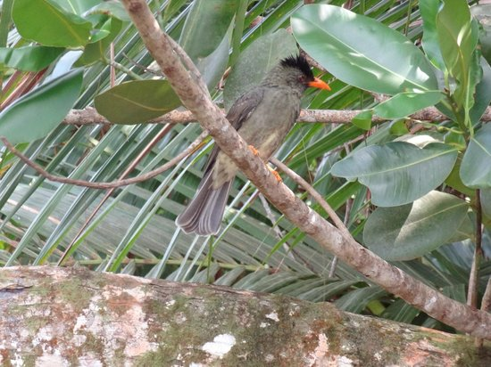 Vallee de Mai Nature Reserve: Beautiful birds
